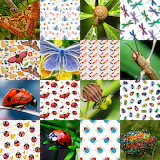 Insect Collage 1