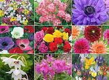 Mixed fllowers