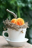 Pumpkin in a teacup