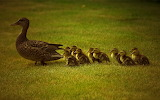 Follow the Leader...