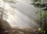Morning Forests Roads Fog Trees Rays of light 564368 1280x924