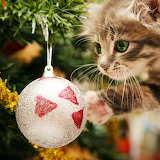 *A Kitty for Christmas...