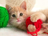 ~ Kitty playing with yarn... :)