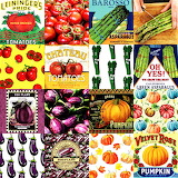 Vegetable Collage 2