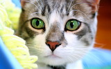 Close Up Kitty...