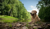 landscapes%20nature%20animals%20dogs%201735x1013%20wallpaper