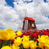 Dutch Windmill...