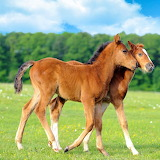 Young Horses...