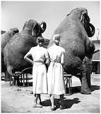 Louise Dahl-Wolfe, Twins with elephants, 1947
