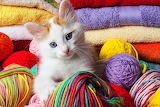 Kitten in Yarn...