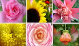 ☺ Collage- Flowers...