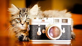 ☺Say Cheese, Please!
