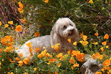 Resting in the Poppies
