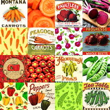 Vegetable Collage 3