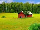 Wooden farmhouse, meadows, birch forest, Sweden