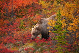 Surrounded in Autumn Colors