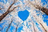 #Blue Sky Heart Among the Boughs