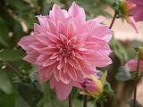 pink exotic flower