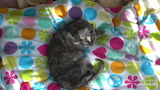 Cat on Colorful Blanket