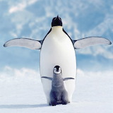 ☺Penguin & Chick...