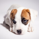 ☺ Lovely puppy...